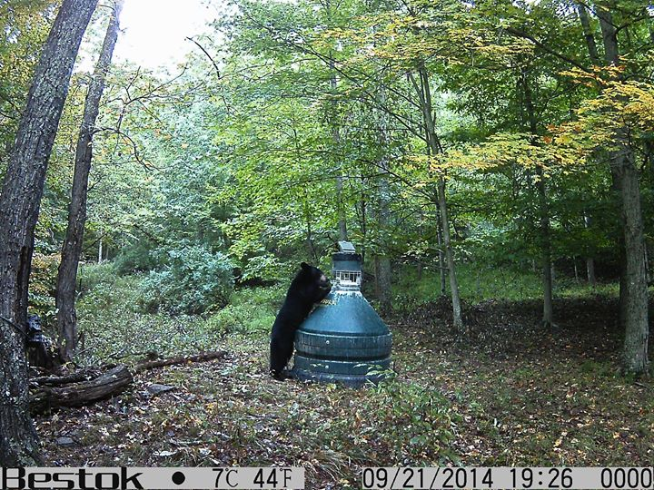 Did you find the lower left corner of the other trail camera?